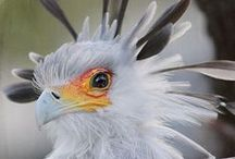 Birds - My Style Nature