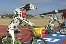 Animals and Bikes / What more could you want?