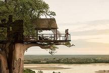 Green Tree House