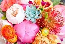 Flores bellas / by Santa Yanez-Montemayor