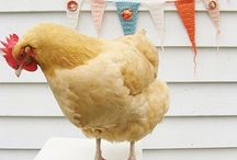 Chickens / by Stringtown Home