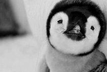 <3 cute / by Lina Lanovoi