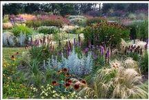 Gardens / by Karlynn Morgan