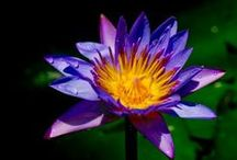 Flower Remedies / Flower Remedies Can Do AMAZING Things and Heal You In All Sorts of Ways!