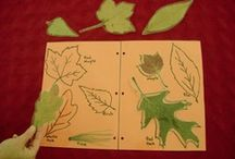 Leaves, Seeds and Squirrels - Fantastic 5's / by Shannon Brow