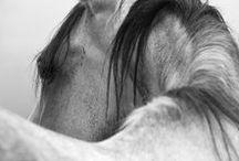 equestrian / Equestrian
