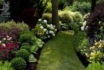 Gardens / by Elisabeth Cleckler