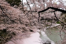 delicate Japan / Japan