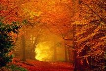 AUTUMN SPLENDOR / Beautiful photos and quotes about autumn...