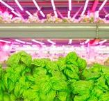 Aeroponic Hydroponic Culture / Aeroponics is the process of growing plants in an air or mist environment without the use of soil or an aggregate medium. https://en.wikipedia.org/wiki/Aeroponics  Hydroponics is a subset of hydroculture, the method of growing plants without soil, using mineral nutrient solutions in a water solvent. https://en.wikipedia.org/wiki/Hydroponics