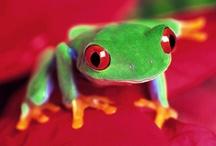 Wildlife / Adorable animals  / by Jackie Sherman