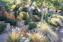 Garden / Drought tolerant plants for California.