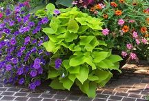 Container pots/landscaping