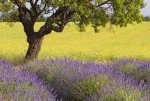 "France / ""La vie est Belle"" ~ Life is Beautiful!!"" / by Laurie Wozniak"