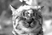 Cat / I Love cat♡♡♡♡♡ / by Keiko Honda