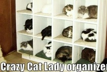 Crazy Cat Lady / by Leigh Schaben