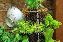 Gardening - Vegetables & Herbs