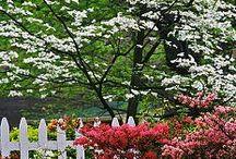 Gardening - Ornamental Trees and Shrubs