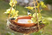 Backyard - Birds & Butterflies / Attracting birds, butterflies & good insect or animals to the garden