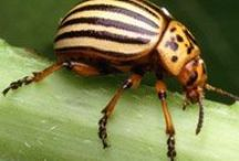 Gardening - Pests, Weeds and Diseases