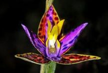 Orchids / by Becky Kapfer