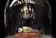 Death Becomes Her / <3 Taxidermy <3 / by Ellen Murray