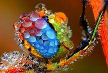 Fauna / Pretty living things / by Ellen Murray