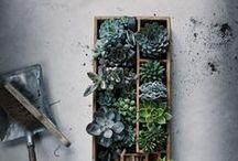 plant spaces... / by Aidan Weinrib