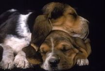 Canine Cuties / by Chris Marden