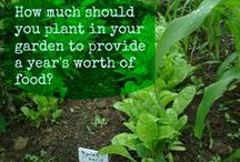 Grow Your Own - Gardening