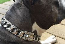 """The Maui Stainless Steel Dog Collar / The Maui Stainless Steel Dog Collar. 1.25""""  wide (32mm) made in Canada of 316L stainless steel. Guaranteed for life"""