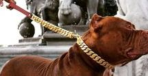 Big Dog Breeds / Looking for a high quality leash or luxury dog collar and lead for your large and strong dog? Big Dog Chains stainless steel and gold  leashes have high quality Cuban links for the best style. Big Dog Chains Cuban Link stainless steel polished leash and luxury dog collar is a perfect option for your XL dog.
