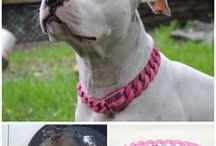Pink Collars / Large custom stainless steel dog collars using extremely strong color finishes from black and red that are extremely abrasion resistant. Enjoy Big Dog Chains' quality in any color. The new Color Dog Color collection offers you the choice of a variety of colors with Big Dog Chains craftsmanship and high quality standards.