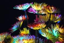 Colors / by Mieko Wakita