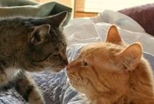 Cats / All about caring for cats. From food choices, to adoption, to health and wellness.
