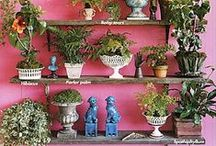 Step Outside / All about planting and gardening, inside and out, and outside decor. / by Teresa Mendoza Sundberg
