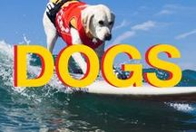 Dogs / Man's best friend deserves the best gear for your adventures. All of our dog & pet content.