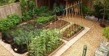 My happy gardening