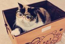 Gato con lana, por favor. / by KRAFT★CROCH | Marisa