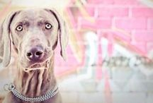 Weim Lover & More