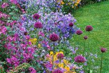 garden / by Cassandra Smith