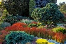 Gardens / by Juliet Foster