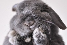 For the Bunnies | Rabbits / bunnies, rabbits, bunny, peter cottontail, fellas.