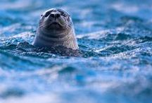 For the Deep Blue Sea | Ocean Marine Life / life under the sea, otters, dolphins, seahorses, sharks, whales, seals, fish, octopus, shells.