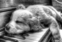 ♔  dog love  ♡  ♔ / Dog love / by angela axiarlis