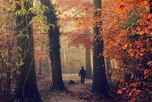 ♔  trees & leaves  ♔ / by angela axiarlis