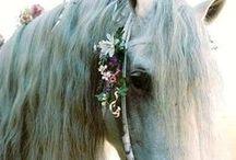 horse, of course / by L u l u S c h w a l l