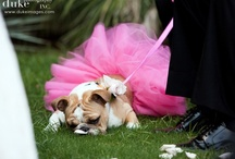 Puppy / Oh how I love dogs... a Quirckie place for all the dog photos I love. / by Melanie Burt