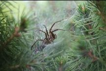 SSSSPIDERS - My Pictures / by Debra Browning