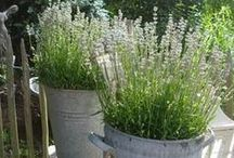 Garden ❁